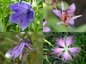 秋の紫色の花