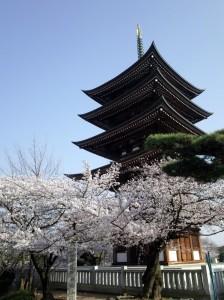 日泰寺の桜
