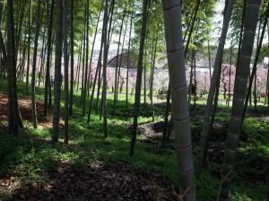 竹林と梅園