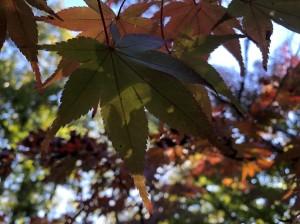 色金山歴史公園紅葉